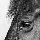 Horse Eye by Bob Martin