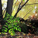 Foliage along the Banks of The Seine by Orla Cahill