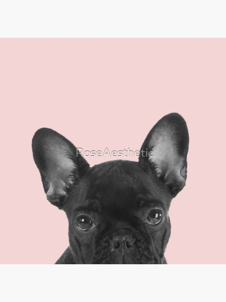 Blush pink Frenchie pop by RoseAesthetic