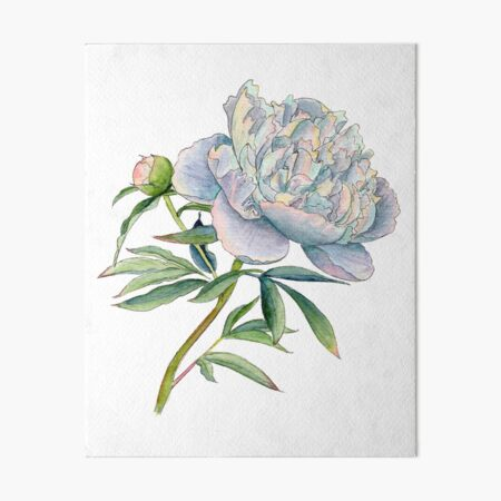 Peony in watercolor and ink by farrahdelle Art Board Print