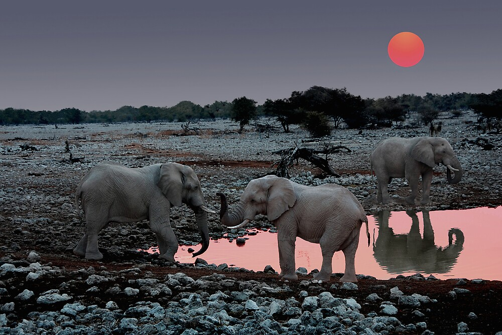 SUNSET WITH ELEPHANTS - NAMIBIA 2 by Michael Sheridan