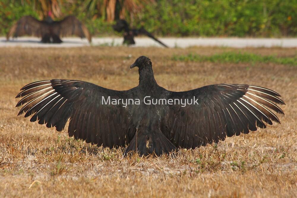 California Condor by Maryna Gumenyuk