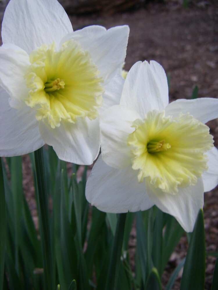 Spring Duet by Vikki Marx