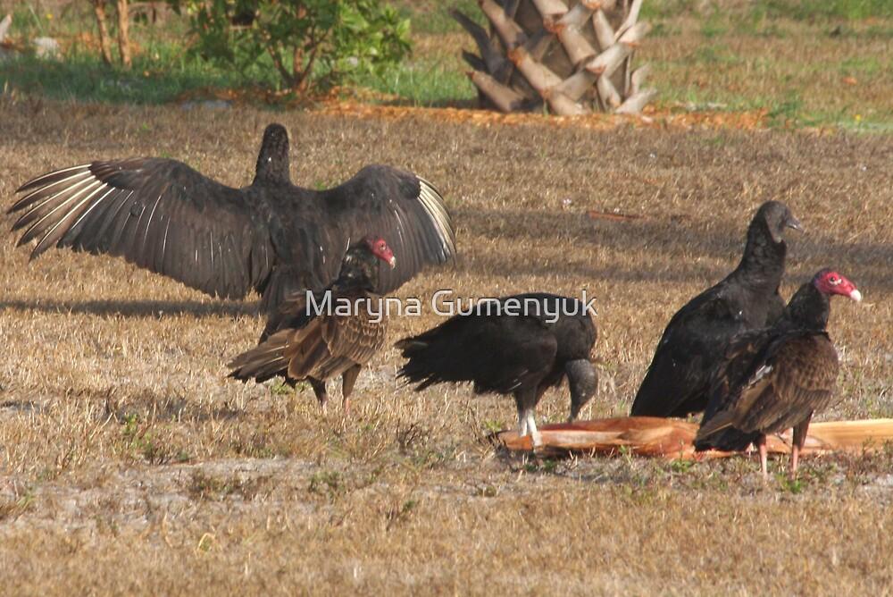 California Condors by Maryna Gumenyuk
