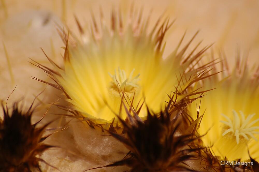 Cactus Flower by CRMDesigns