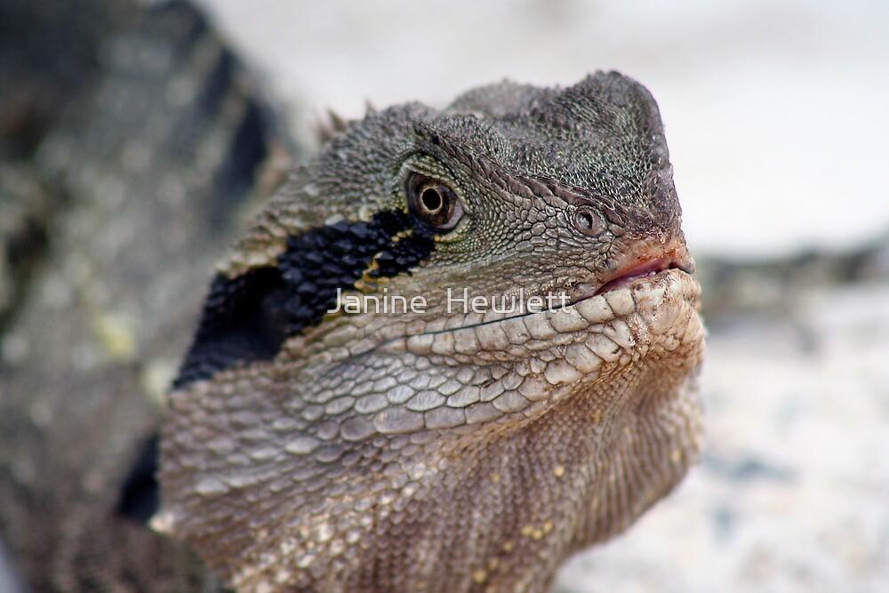 Dragon.. by Janine  Hewlett