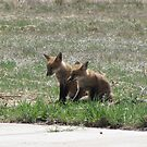 Twin Baby Foxes 02 by janetmarston