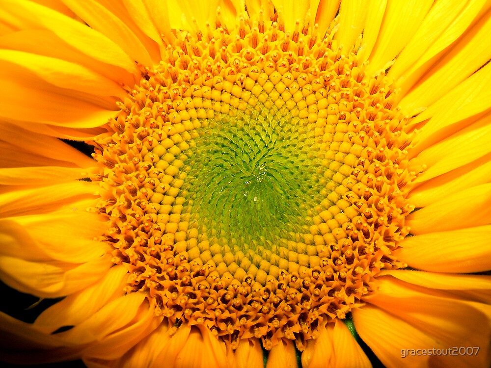 FLOWERS OF THE SUN by gracestout2007