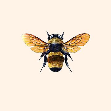 Belinda Beatrice beehive honey bee by closeddoor
