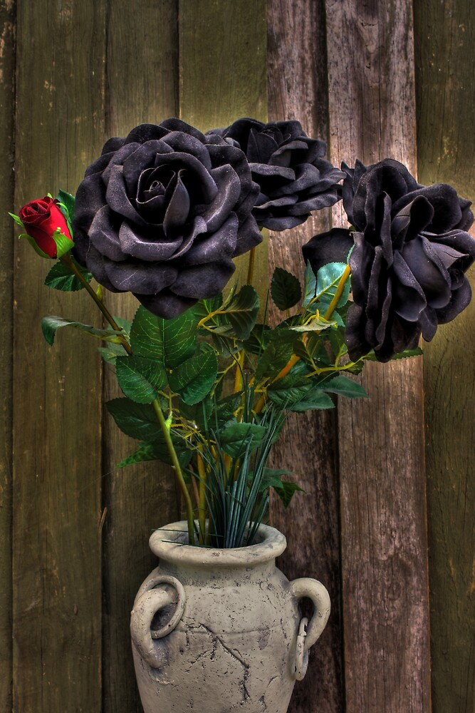 Roses by Keith G. Hawley