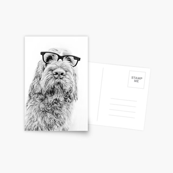 Intelligent friend Spinone Postcard
