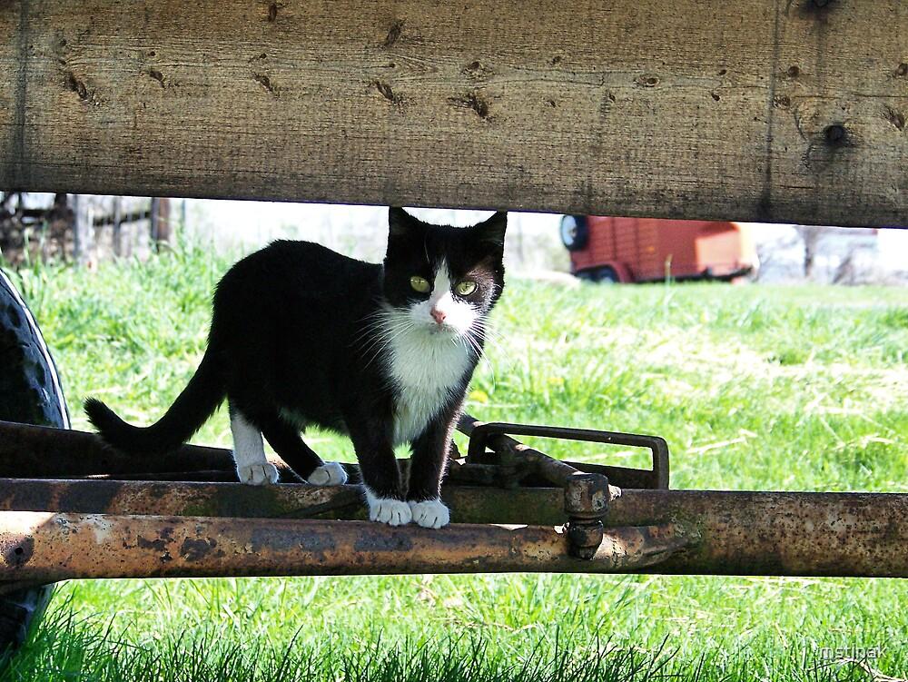 Farm Cat 3 by mstinak