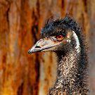 Emu by Danielle  Miner