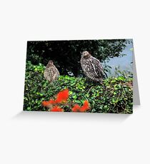 Grouse in the garden Greeting Card