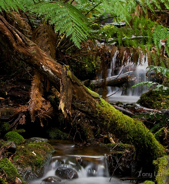 Cement Creek Cascades by Tony Lin