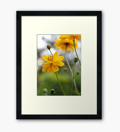 April Sun Framed Print