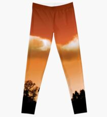 Silhouetted trees Leggings