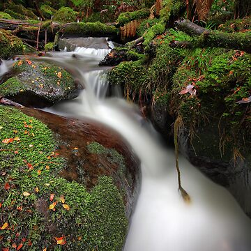 Paradise Gully - Cement Creek by PixelMuser