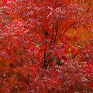 Autumn Amazement by Richard  Stanley