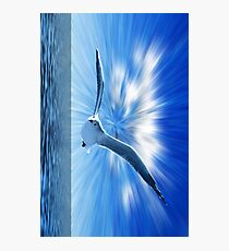 Seagull In Shining Sky Photographic Print