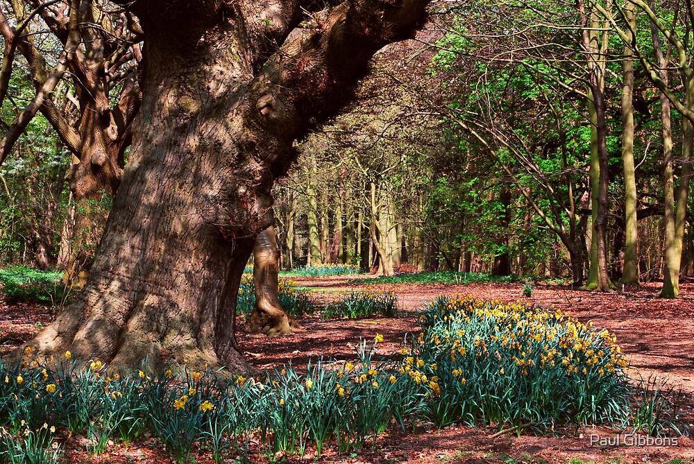 Beneath the Trees by spottydog06