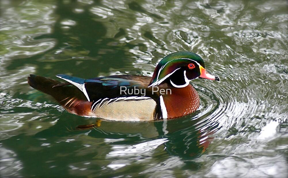 Wood Duck (Aix sponsa) by Ruby  Pen