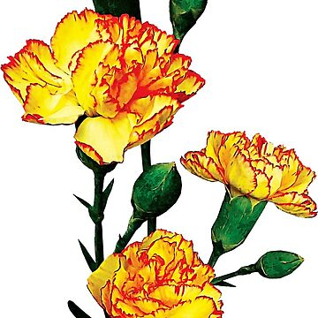 One Red-Tipped Yellow Carnation by SudaP0408