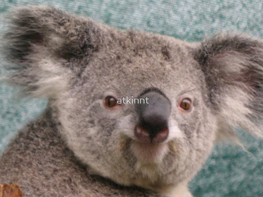 Koala  by atkinnt