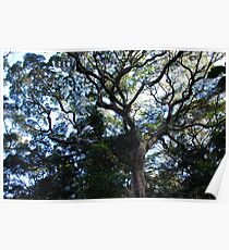 Harrington Rainforest Tree Poster