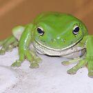 Kermit by Graham Mewburn