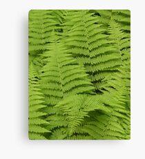 Ferns Fairway Canvas Print