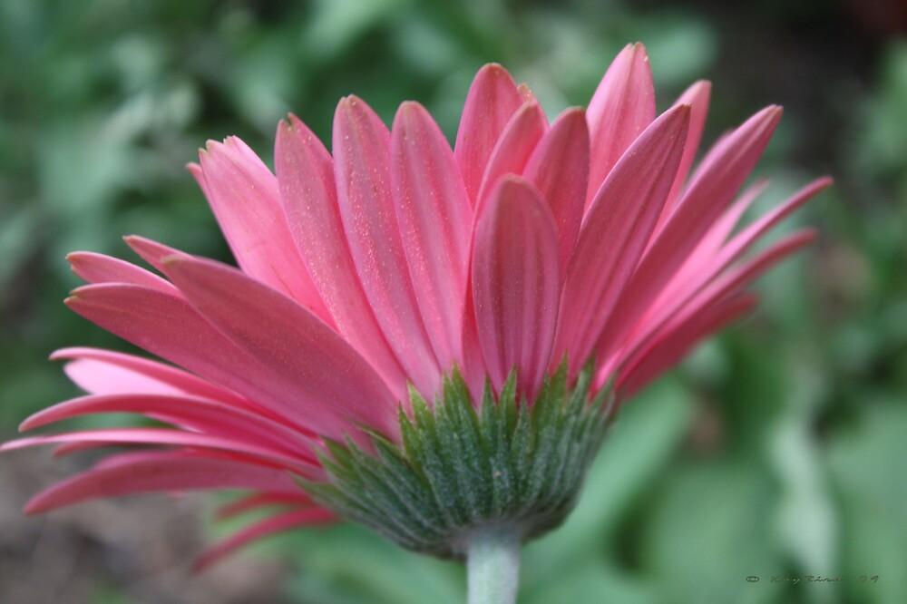 Pretty In Pink by Kay  G Larsen
