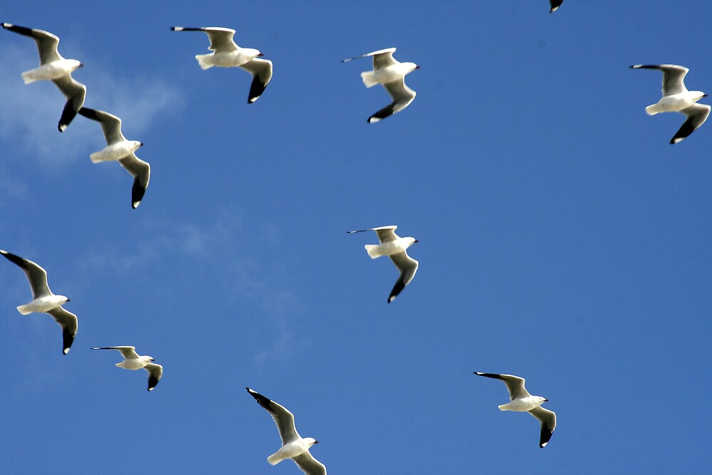 Seagulls by Becky Hirst