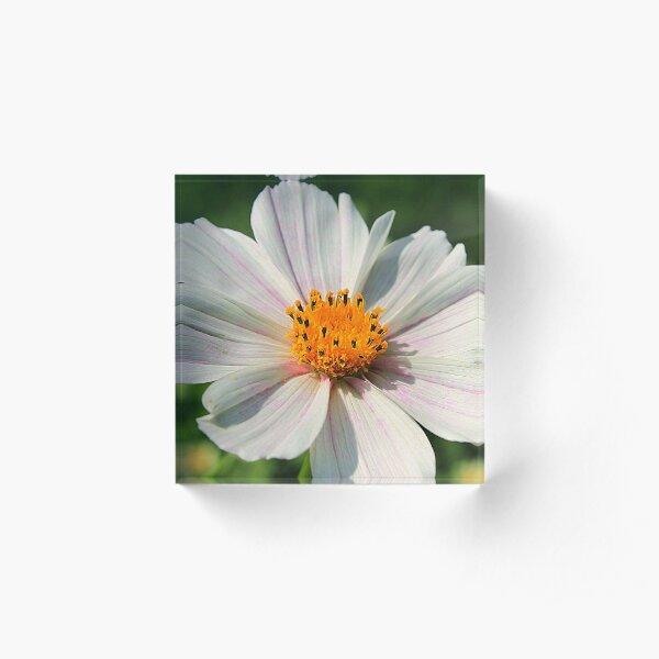 Summer Daisy in Sunshine Acrylic Block