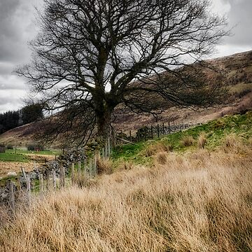 Moody scenery in Central Scotland by 242Digital