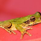 Green Frog Chilling by Tracy Riddell