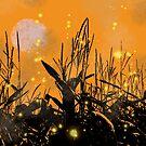 Corn fields by chihuahuashower