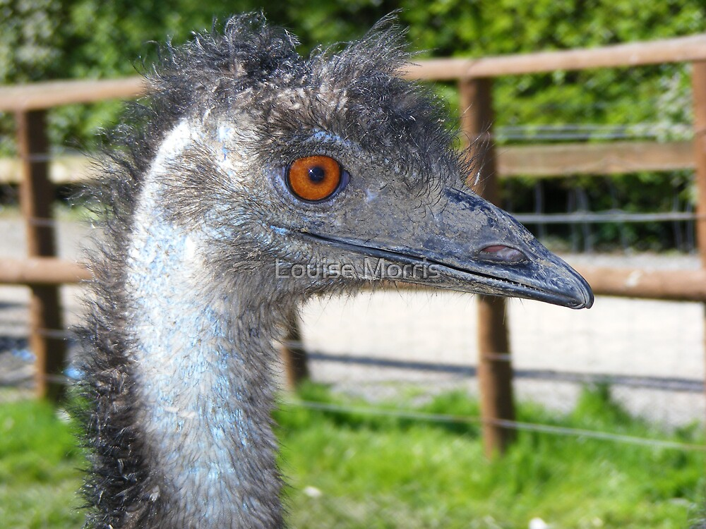 Emu! by Louise Morris