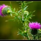 Thistles by thatIam