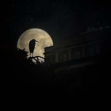 Night Of The Heron by ChrisLord