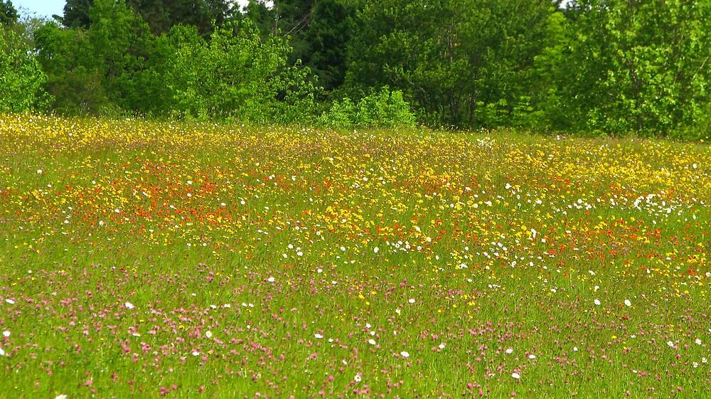 The wildflower garden by Patty Gross