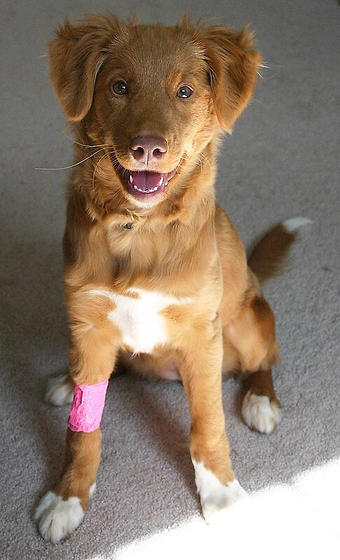 Chey Bandage by mikemdg