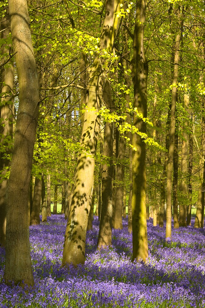 Dockey wood by Mark Thompson