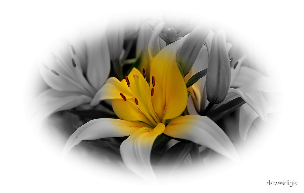 Lilies...............Varing Colors by davesdigis