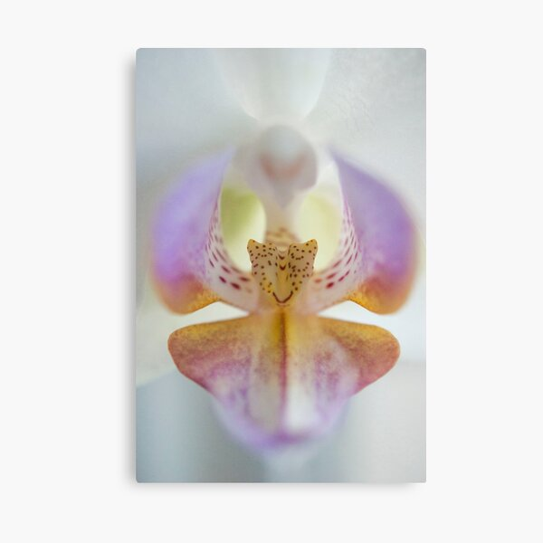 Center of the Orchid Canvas Print