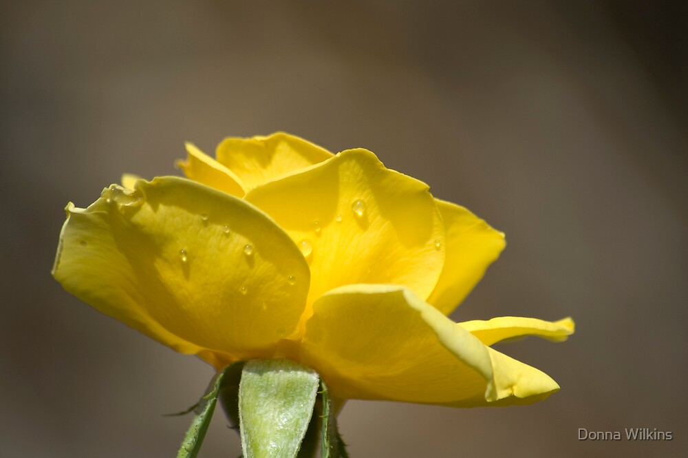 Perfect Yellow by Donna Wilkins