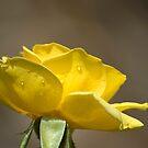 Perfect Yellow by Donna Adamski