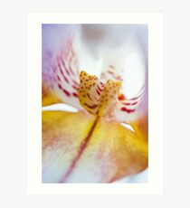 Spotted Orchid Art Print
