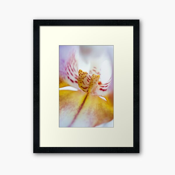 Spotted Orchid Framed Art Print