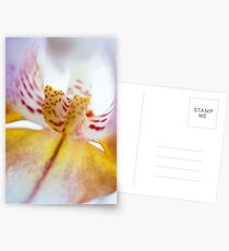 Spotted Orchid Postcards